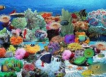 Blue Ocean Aquarium Giveaway
