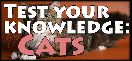 Test your knowledge: Cats Giveaway