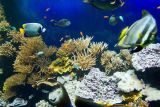 Aquarium at Oceanographic Museum of Monaco Giveaway